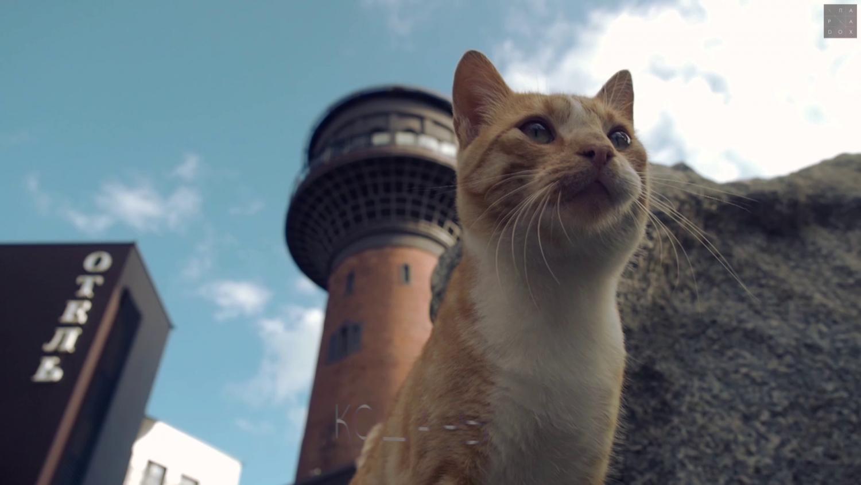 <p>Мурариум. Музей кошек. Зеленоградск</p>/<p>История башни в фотографиях</p>