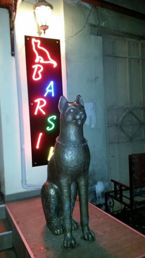 <p>Мурариум. Музей кошек. Зеленоградск</p>/<p>Реальные кошки</p>